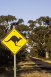 australasia;Australia;australian;black;forest;forests;kangaroo;Kangaroo-Warning-Sign;kangaroos;mount-arapiles;mt-arapiles;mt.-arapiles;natural;nature;Road;road-sign;road-signs;road_sign;road_signs;roads;roadsign;roadsigns;sign;signs;symbol;symbols;tranportation;transport;travel;Victoria;warn;yellow