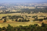 agricultural;agriculture;ararat;australasia;australia;australian;country;countryside;crop;crops;eucalypt;eucalypts;eucalyptus;eucalytis;farm;farming;farmland;farms;field;fields;gum;gum-tree;gum-trees;gums;horticulture;meadow;meadows;paddock;paddocks;pasture;pastures;rural;tree;trees;victoria