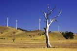 aerogenerator;aerogenerators;agricultural;agriculture;australasia;australia;australian;beaufort;country;countryside;dynamo;eucalypt;eucalypts;eucalyptus;eucalytis;farm;farming;farmland;farms;field;fields;generation;generators;gum;gum-tree;gum-trees;gums;meadow;meadows;paddock;paddocks;pasture;pastures;power-generation;power-generator;power-generators;rural;sustainable-energy;sustainable-generation;tree;trees;victoria;wind-energy;wind-farm;wind-farms;wind-generation;wind-generator;wind-generators;wind-turbine;wind-turbines;windmill;windmills