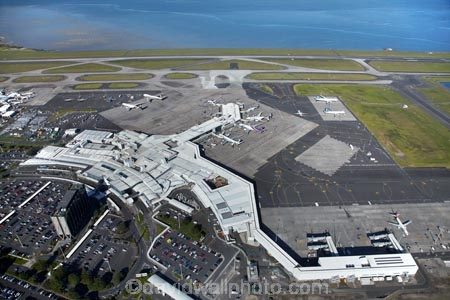n z police and auckland international airport Outrage is building over the killing of a trainee airport security services dog, shot dead by police after it was spooked and escaped its handler at auckland international airport this morning.