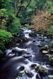 bush;Catlins;creek;long-exposure;long_exposure;McLean-Falls;n.z.;native-bush;New-Zealand;NZ;overgrown;river-bed;riverbed;rivers;South-Island;southland;Tautuku-River