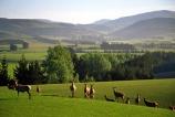 agriculture;antler;antlers;Balclutha;cervena,;Deer;farm;farming;Farmland;farms;field;fields;grass;green;hills;lush;meadow;meadows;n.z.;New-Zealand;nz;paddock;paddocks;pasture;pastures;plains;rolling;rural;South-Island;South-Otago;Southland;velvet;venison;verdant