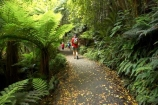 beautiful;beauty;bush;Catlins;child;children;endemic;forest;forests;green;hike;hiker;hikers;hiking;lush;native;native-bush;natives;natural;nature;New-Zealand;people;person;rain-forest;rain-forests;rain_forest;rain_forests;rainforest;rainforests;scene;scenic;South-Island;south-otago;southland;timber;tramp;tramper;trampers;tramping;tree;tree-trunk;tree-trunks;trees;trek;treker;trekers;treking;trekker;trekkers;trekking;trunk;trunks;verdant;walk;walker;Walkers;walking;wood;woods