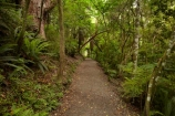 beautiful;beauty;bush;Catlins;Catlins-District;Catlins-Region;endemic;forest;forests;green;hiking-track;hiking-tracks;N.Z.;native;native-bush;natives;natural;nature;New-Zealand;NZ;Otago;Purakanui-Falls;Purakaunui-Falls;rain-forest;rain-forests;rain_forest;rain_forests;rainforest;rainforests;S.I.;scene;scenic;SI;South-Is;South-Island;South-Otago;Sth-Is;Sth-Otago;track;tree;trees;walking-track;walking-tracks;woods