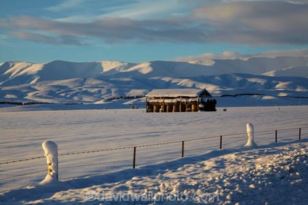 agricultural;agriculture;barn;barns;Central-Otago;cold;Coldness;country;countryside;Daytime;Exterior;extreme-weather;farm;farm-building;farm-buildings;farming;farmland;farms;fence;fence-line;fence-lines;fence_line;fence_lines;fenceline;fencelines;fences;field;fields;freeze;freezing;Hawkdun-Ra;Hawkdun-Range;hay;hay-bale;hay-bales;hay-barn;hay-barns;hay-shed;hay-sheds;haybarn;haybarns;hayshed;haysheds;high-country;hill;hills;Idaburn;Landscape;Landscapes;Maniototo;meadow;meadows;mountain;mountains;N.Z.;natural;Nature;New-Zealand;NZ;Otago;Oturehua;Outdoor;Outdoors;Outside;paddock;paddocks;pasture;pastures;rural;S.I.;Scenic;Scenics;Season;Seasons;shed;sheds;SI;snow;snowfall;snowy;snowy-hills;snowy-mountains;South-Is;South-Is.;South-Island;Sth-Is;straw;weather;White;winter;winter-feed;Wintertime;wintery;wintry
