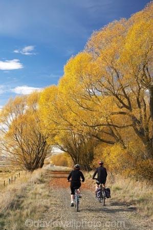 adventure;autuminal;autumn;autumn-colour;autumn-colours;autumnal;avenue;avenues;bicycle;bicycles;bike;biker;bikes;Central-Otago;Central-Otago-Rail-Trail;color;colors;colour;colours;cycle;cycle-track;cycler;cyclers;cycles;cycling-track;cyclist;cyclists;deciduous;fall;golden;Ida-Valley;leaf;leaves;Maniototo;mountain-bike;mountain-bike-track;mountain-biker;mountain-bikers;mountain-bikes;mtn-bike;mtn-biker;mtn-bikers;mtn-bikes;N.Z.;New-Zealand;NZ;Otago;Otago-Central-Rail-Trail;Oturehua;push-bike;push-bikes;push_bike;push_bikes;pushbike;pushbikes;rail-trail;rail-trails;S.I.;scenic;season;seasonal;seasons;SI;South-Island;sports;tourism;track;tracks;tree;trees;willow;willow-tree;willow-trees;willows;yellow