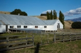 Central-Otago;countryside;farm;Farm-Building;Farm-Buildings;Farm-Shed;Farm-Sheds;farm-yard;farm-yards;farming;farms;farmyard;farmyards;N.Z.;New-Zealand;NZ;Otago;rural;S.I.;Shearing-Shed;Shearing-Sheds;Sheep-Shed;Sheep-Sheds;sheep-yard;sheep-yards;sheepyard;sheepyards;SI;South-Is;South-Is.;South-Island;Sth-Is;Sth-Iscountry;stock-yard;stock-yards;stockyard;stockyards;Tarras;weather-board;weatherboard;Wool-Shed;Wool-Sheds;woolshed;woolsheds