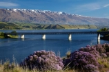 bridge;bridges;Central-Otago;Cromwell;Cromwell-Bridge;Deadmans-Point-Bridge;Deadmans-Point-Bridge;flower;flowers;infrastructure;lake;Lake-Dunstan;lakes;lilac;mauve;N.Z.;New-Zealand;NZ;Otago;Pisa-Range;purple;road-bridge;road-bridges;S.I.;season;seasonal;seasons;SI;South-Is;South-Island;spring;spring-color;spring-colour;spring_time;springtime;Sth-Is;thyme;traffic-bridge;traffic-bridges;transport;violet;Wild-thyme
