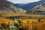 agricultural;agriculture;autuminal;autumn;autumn-colour;autumn-colours;autumnal;Bannockburn;Central-Otago;Central-Otago-Vineyards;color;colors;colour;colours;country;countryside;crop;crops;cultivation;deciduous;fall;farm;farming;farmland;farms;Felton-Rd;Felton-Road;field;fields;gold;golden;grape;grapes;grapevine;horticulture;Kawarau-Gorge;leaf;leaves;Mount-Difficulty;Mt-Difficulty;Mt.-Difficulty;N.Z.;New-Zealand;NZ;Otago;Pisa-Range;poplar;poplar-tree;poplar-trees;poplars;row;rows;rural;S.I.;season;seasonal;seasons;SI;South-Island;Sth-Is;Sth-Is.;tree;trees;vine;vines;vineyard;vineyards;vintage;wine;wineries;winery;wines;yellow
