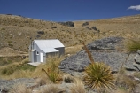 Aciphylla-aurea;alpine;back-country-hut;backcountry;backcountry-hut;backcountry-huts;Central-Otago;clump;corrugated-iron;corrugated-steel;DOC-hut;DOC-huts;flower-spikes;flowers;golden;Golden-Speargrass;high-altitude;high-country-hut;highcountry;highcountry-hut;highcountry-huts;highlands;hikers-hut;hikers-huts;huits;hut;mountain-hut;mountain-huts;mountains;N.Z.;New-Zealand;NZ;Old-Woman-Hut;Old-Woman-Range;Otago;outdoors;range;ranges;rock;rocks;S.I.;schist;shelter;SI;South-Island;spike;spikes;trampers-hut;trampers-huts;tussock;tussock-grass;tussocks;yellow