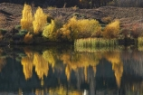 autuminal;autumn;autumn-colour;autumn-colours;autumnal;Bannockburn;Bannockburn-Inlet;calm;Central-Otago;color;colors;colour;colours;deciduous;fall;golden;lake;Lake-Dunstan;lakes;leaf;leaves;N.Z.;New-Zealand;NZ;Otago;placid;quiet;reed;reeds;reflection;reflections;S.I.;season;seasonal;seasons;serene;SI;smooth;South-Island;still;tranquil;tree;trees;water;willow;willow-tree;willow-trees;willows;yellow