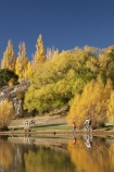 autuminal;autumn;autumn-colour;autumn-colours;autumnal;Bannockburn;Bannockburn-Inlet;bicycle;bicycles;bike;bikes;boy;boys;calm;Central-Otago;child;children;color;colors;colour;colours;cycle;cycler;cyclers;cycles;cyclist;cyclists;deciduous;fall;female;golden;Kawarau-Arm;kid;kids;lake;Lake-Dunstan;lakes;little-boy;little-boys;model-release;model-released;mother;mother-and-son;mothers;mountain-bike;mountain-biker;mountain-bikers;mountain-bikes;mtn-bike;mtn-biker;mtn-bikers;mtn-bikes;N.Z.;New-Zealand;NZ;Otago;outdoor;outdoors;people;person;placid;poplar;poplar-tree;poplar-trees;poplars;push-bike;push-bikes;push_bike;push_bikes;pushbike;pushbikes;quiet;recreation;reflection;reflections;S.I.;season;seasonal;seasons;serene;SI;smooth;son;sons;South-Is.;South-Island;still;tranquil;tree;trees;water;willow;willow-tree;willow-trees;willows;woman;yellow