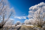 agricultural;agriculture;beautiful;calm;calmness;Central-Otago;clean;clear;cold;Coldness;Color;Colour;country;countryside;Daytime;dusty;Exterior;farm;farming;farmland;farms;field;fields;freeze;freezing;freezing-fog;frost;Frosted;frosty;gravel-road;gravel-roads;high-country;hoar-frost;hoar-frosts;Hoarfrost;hoarfrosts;ice;ice-crystals;icy;Ida-Valley;idyllic;Landscape;Landscapes;Maniototo;meadow;meadows;metal-road;metal-roads;metalled-road;metalled-roads;N.Z.;natural;Nature;new-zealand;NZ;Otago;Oturehua;Outdoor;Outdoors;Outside;paddock;paddocks;pasture;pastures;peaceful;Peacefulness;phenomena;phenomenon;pure;Quiet;Quietness;rime;rime-ice;road;roads;rural;S.I.;Scenic;Scenics;Season;Seasons;SI;silence;south-island;spectacular;stunning;tranquil;tranquility;tree;trees;view;water;weather;White;willow;willow-tree;willow-trees;willows;winter;Wintertime;wintery;wintry