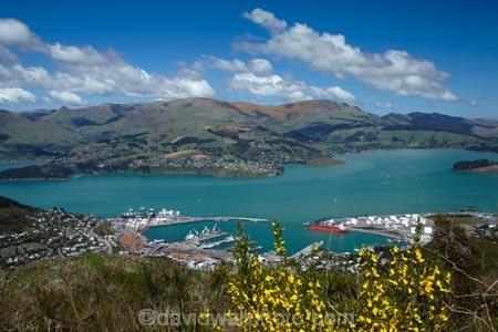 Banks-Peninsula;broom-plant;Canterbury;Chch;Christchurch;gondola-top-station;harbor;harbors;harbour;harbours;invasive-species;Lyttelton-Harbor;Lyttelton-Harbour;Lyttelton-Port;Mount-Cavendish;Mount-Cavendish-Gondola;Mt-Cavendish;Mt-Cavendish-Gondola;N.Z.;New-Zealand;noxious-weed;NZ;pest;Port-Hills;Port-of-Lyttelton;S.I.;SI;South-Is;South-Island;Sth-Is;top-station;yellow-flower;yellow-flowers