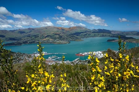 Banks-Peninsula;broom-plant;Canterbury;Chch;Christchurch;gondola-top-station;harbor;harbors;harbour;harbours;invasive-species;Lyttelton-Harbor;Lyttelton-Harbour;Mount-Cavendish;Mount-Cavendish-Gondola;Mt-Cavendish;Mt-Cavendish-Gondola;N.Z.;New-Zealand;noxious-weed;NZ;pest;Port-Hills;S.I.;SI;South-Is;South-Island;Sth-Is;top-station;yellow-flower;yellow-flowers