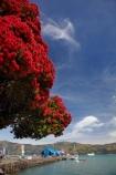 Akaroa;Akaroa-Harbor;Akaroa-Harbour;Akaroa-Wharf;Banks-Peninsula;Canterbury;dock;docks;flower;flowers;jetties;jetty;metrosideros-excelsa;N.Z.;native;native-plant;native-plants;New-Zealand;NZ;pier;piers;plant;plants;pohutakawa;pohutakawas;pohutukawa;pohutukawa-flower;pohutukawa-flowers;pohutukawa-tree;pohutukawa-trees;pohutukawas;quay;quays;S.I.;SI;South-Is;South-Island;summer;tree;trees;waterside;wharf;wharfes;wharves