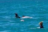Akaroa;Akaroa-Harbor;Akaroa-Harbour;Banks-Peninsula;Canterbury;Cephalorhynchus;Cephalorhynchus-hectori;cetacean;cetaceans;dolphin;dolphins;Hectors-dolphin;Hectors-dolphin;mammal;mammals;marine-mammal;marine-mammals;N.Z.;New-Zealand;NZ;people;person;S.I.;South-Is;South-Island;swim;swimming;swimming-with-dolphins;swimming-with-the-dolphins;tourism;tourist;tourists;wildlife