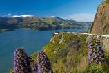 2011-earthquake;Banks-Peninsula;barrier;barriers;bluff;bluffs;Boraginaceae;Canterbury;Chch;Christchurch;Christchurch-earthquake;cliff;cliffs;closed;Diamond-Harbor;Diamond-Harbour;Echium;Echium-plant;Echium-plants;Echiums;Lyttelton-Harbour;N.Z.;New-Zealand;NZ;Port-Hills;Purau-Bay;purple-flower;purple-flowers;road-barrier;road-barriers;rockfall;S.I.;seasonal;seasons;SI;South-Is;South-Island;spring;spring-time;Sth-Is;Sumner-Rd;Sumner-Road