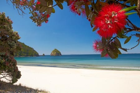 beach;beaches;coast;coastal;coastline;Coromandel;Coromandel-Peninsula;crimson-flower;cromson-flowers;flower;flowers;metrosideros-excelsa;N.I.;N.Z.;New-Chums-Beach;New-Zealand;NI;North-Is;North-Is.;North-Island;NZ;ocean;oceans;plant;plants;pohutakawa;pohutakawas;pohutukawa;pohutukawa-flower;pohutukawa-flowers;pohutukawa-tree;pohutukawa-trees;pohutukawas;red-flower;red-flowers;sand;sandy;sea;seas;shore;shoreline;summer;tree;trees;Waikato
