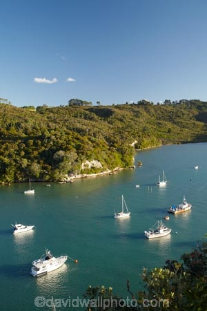 Back-Bay;boat;boats;Coromandel;Coromandel-Peninsula;cruise;cruises;fishing-boat;fishing-boats;launch;launches;mooring;N.I.;N.Z.;New-Zealand;NI;North-Is;North-Is.;North-Island;NZ;pleasure-boat;pleasure-boats;speed-boat;speed-boats;tour-boat;tour-boats;tourism;tourist;tourist-boat;tourist-boats;Waikato;water;Whitianga;Whitianga-Harbor;Whitianga-Harbour