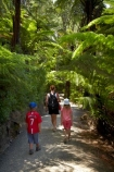 beautiful;beauty;boy;boys;brother;brothers;bush;Cathedral-Cove;Cathedral-Cove-recreation-reserve;child;children;Coromandel;Coromandel-Peninsula;cyathea;endemic;families;family;fern;ferns;forest;forests;frond;fronds;girl;girls;green;Hahei;kid;kids;little-boy;little-boys;little-girl;little-girls;lush;marine-reserve;marine-reserves;Mercury-Bay;N.I.;N.Z.;native;native-bush;natives;natural;nature;New-Zealand;NI;North-Is;North-Is.;North-Island;Nothofagus;NZ;plant;plants;ponga;pongas;punga;pungas;scene;scenic;sibling;siblings;sister;sisters;southern-beeches;Te-Whanganui-A-Hei-Marine-Reserve;Te-Whanganui_A_Hei-Marine-Reserve;tree;tree-fern;tree-ferns;trees;trunk;trunks;verdant;Waikato;walk;walker;walkers;walking;walking-track;walking-tracks
