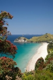 beach;beaches;coast;coastal;coastline;coastlines;coasts;Coromandel;Coromandel-Peninsula;crimson;flower;flowers;foreshore;Hahei;Hahei-Beach;metrosideros-excelsa;N.I.;N.Z.;New-Zealand;NI;North-Is;North-Is.;North-Island;NZ;ocean;plant;plants;pohutakawa;pohutakawas;pohutukawa;pohutukawa-flower;pohutukawa-flowers;pohutukawa-tree;pohutukawa-trees;pohutukawas;red;red-flowers;sand;sandy;sea;seas;shore;shoreline;shorelines;shores;tree;trees;Waikato;water