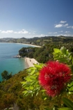 beach;beaches;coast;coastal;coastline;Cooks-Bay;Cooks-Beach;Cooks-Bay;Cooks-Beach;Coromandel;Coromandel-Peninsula;crimson-flower;crimson-flowers;flower;flowers;Lonely-Bay;Mercury-Bay;metrosideros-excelsa;N.I.;N.Z.;New-Zealand;NI;North-Is;North-Is.;North-Island;NZ;ocean;oceans;plant;plants;pohutakawa;pohutakawas;pohutukawa;pohutukawa-flower;pohutukawa-flowers;pohutukawa-tree;pohutukawa-trees;pohutukawas;red-flower;red-flowers;sand;sandy;sea;seas;shore;shoreline;summer;tree;trees;Waikato