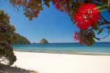 beach;beaches;coast;coastal;coastline;Coromandel;Coromandel-Peninsula;crimson-flower;cromson-flowers;flower;flowers;metrosideros-excelsa;N.I.;N.Z.;New-Chums-Beach;New-Zealand;NI;North-Is;North-Is.;North-Island;NZ;ocean;oceans;plant;plants;pohutakawa;pohutakawas;pohutukawa;pohutukawa-flower;pohutukawa-flowers;pohutukawa-tree;pohutukawa-trees;pohutukawas;red-flower;red-flowers;sand;sandy;sea;seas;shore;shoreline;summer;tree;trees;Waikato