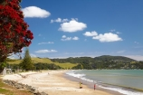 beach;beaches;Buffalo-Beach;coast;coastal;coastline;Coromandel;Coromandel-Peninsula;crimson-flower;crimson-flowers;flower;flowers;metrosideros-excelsa;N.I.;N.Z.;New-Zealand;NI;North-Is;North-Is.;North-Island;NZ;ocean;oceans;plant;plants;pohutakawa;pohutakawas;pohutukawa;pohutukawa-flower;pohutukawa-flowers;pohutukawa-tree;pohutukawa-trees;pohutukawas;red-flower;red-flowers;sand;sandy;sea;seas;shore;shoreline;summer;tree;trees;Waikato;Whitianga