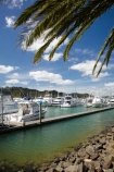 boat;boats;calm;calmness;Coromandel;Coromandel-Peninsula;fishing-boats;harbor;harbors;harbour;harbours;launch;launches;marina;marinas;N.I.;N.Z.;New-Zealand;NI;North-Is;North-Is.;North-Island;NZ;palm;palm-tree;palm-trees;palms;port;ports;sail;sailing;still;stillness;Waikato;Whitianga;Whitianga-Marina;yacht;yachts