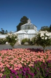 bloom;blooming;blooms;Botanic-Garden;Botanic-Gardens;Botanical-Garden;Botanical-Gardens;city-garden;city-gardens;color;colorful;colour;colourful;council-garden;council-gardens;Dunedin;Dunedin-Botanic-Garden;Dunedin-Botanic-Gardens;Dunedin-Botanical-Garden;Dunedin-Botanical-Gardens;Dunedin-Gardens;flower;flowers;fresh;garden;gardens;glasshouse;glasshouses;grow;growth;N.Z.;New-Zealand;NZ;Otago;pink;plant;plants;S.I.;season;seasonal;seasons;SI;South-Is.;South-Island;spring;springtime