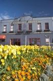 ale-house;ale-houses;bar;bars;bloom;blooming;blooms;Bonapartes-Restaurant;Caversham;civic-garden;civic-gardens;council-garden;council-gardens;Dunedin;flower;flowers;Forbury-Corner;free-house;free-houses;fresh;grow;growth;Hillside-Road;hotel;hotels;N.Z.;New-Zealand;NZ;Otago;pub;public-garden;public-gardens;public-house;public-houses;pubs;renew;S.I.;saloon;saloons;season;seasonal;seasons;SI;South-Dunedin;South-Is.;South-Island;spring;springtime;tavern;taverns;tulip;tulips;Waterloo-Hotel;yellow;yellow-tulip;Yellow-Tulips