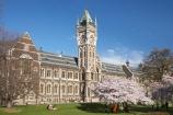 bloom;blooming;blooms;blossom;blossoming;blossoms;building;buildings;Clock-Tower;Clock-Towers;college;colleges;Dunedin;education;fresh;grow;growth;heritage;historic;historic-building;historic-buildings;historical;historical-building;historical-buildings;Historical-Registry-Building;history;N.Z.;New-Zealand;NZ;old;Otago;Otago-University;Registry-Building;renew;S.I.;season;seasonal;seasons;SI;South-Is.;South-Island;spring;springtime;tertiary-education;tradition;traditional;universities;university;University-of-Otago