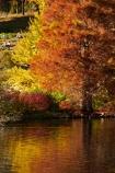 autuminal;autumn;autumn-colour;autumn-colours;autumn-tree;autumn-trees;autumnal;Botanic-Garden;Botanic-Gardens;Botanical-Garden;Botanical-Gardens;calm;city-garden;city-gardens;color;colors;colour;colours;council-garden;council-gardens;deciduous;duck-pond;duck-ponds;Dunedin;Dunedin-Botanic-Garden;Dunedin-Botanic-Gardens;Dunedin-Botanical-Garden;Dunedin-Botanical-Gardens;Dunedin-Gardens;fall;garden;gardens;leaf;leaves;N.Z.;New-Zealand;North-Dunedin;NZ;Otago;placid;plant;plants;pond;ponds;quiet;reflection;reflections;S.I.;season;seasonal;seasons;serene;SI;smooth;South-Is;South-Is.;South-Island;Sth-Is;still;tranquil;tree;trees;water
