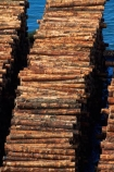 bulk;dock;docks;Dunedin;export;export-logs;exporting;exports;forestry;forestry-industry;import;importing;industrial;industry;log;log-stack;log-stacks;logging;logs;lumber;N.Z.;New-Zealand;NZ;Otago;pattern;patterns;pier;piers;pine;pine-tree;pine-trees;pines;pinus-radiata;port;Port-Chalmers;ports;Pt-Chalmers;quay;quays;S.I.;SI;South-Is;South-Is.;South-Island;Sth-Is;stockpile;stockpiles;timber;timber-industry;trade;tree;tree-trunk;tree-trunks;trees;waterside;wharf;wharfes;wharves;wood