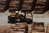 bulk;dock;docks;Dunedin;export;export-logs;exporting;exports;forestry;forestry-industry;front_end-laoder;front_end-loaders;import;importing;industrial;industry;loader;loaders;log;log-loader;log-loaders;log-stack;log-stacks;logging;logging-equipment;logs;lumber;N.Z.;New-Zealand;NZ;Otago;Otago-Harbour;Otago-port;pier;piers;pine;pine-tree;pine-trees;pines;pinus-radiata;port;Port-Chalmers;Port-of-Otago;Port-Otago;ports;Pt-Chalmers;quay;quays;S.I.;SI;South-Is;South-Is.;South-Island;Sth-Is;stockpile;stockpiles;timber;timber-industry;trade;tree;tree-trunk;tree-trunks;trees;waterside;wharf;wharfes;wharves;wood