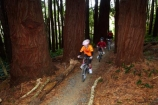 bicycle;bicycles;bike;bike-track;bike-tracks;bike-trail;bike-trails;bikes;child;children;cycle;cycle-track;cycle-tracks;cycle-trail;cycle-trails;cycler;cyclers;cycles;cycleway;cycleways;cyclist;cyclists;Dunedin;excercise;excercising;girl;girls;mountain-bike;mountain-biker;mountain-bikers;mountain-bikes;mtn-bike;mtn-biker;mtn-bikers;mtn-bikes;N.Z.;New-Zealand;NZ;Otago;people;person;push-bike;push-bikes;push_bike;push_bikes;pushbike;pushbikes;redwood-tree;redwood-trees;Redwoods-mountain-bike-track;S.I.;SI;South-Is;South-Is.;South-Island;Sth-Is;tree-trunk;tree-trunks;Waikari-Creek