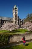 bloom;blooming;blooms;blossom;blossoming;blossoms;building;buildings;Clock-Tower;Clock-Towers;college;college-student;college-students;colleges;Dunedin;education;fresh;grow;growth;heritage;historic;historic-building;historic-buildings;historical;historical-building;historical-buildings;Historical-Registry-Building;history;Leith-Stream;N.Z.;New-Zealand;NZ;old;Otago;Otago-University;people;person;Registry-Building;renew;S.I.;season;seasonal;seasons;SI;South-Is;South-Is.;South-Island;spring;springtime;Sth-Is;student;students;teenager;teenagers;tertiary-education;tradition;traditional;uni;universities;university;University-of-Otago;university-student;university-students;Water-of-Leith;Waters-of-Leith;young-people;young-person