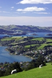 agricultural;agriculture;country;countryside;dunedin;farm;farming;farmland;farms;field;fields;grazing;harbor;harbours;highcliff-road;meadow;meadows;new-zealand;otago-harbor;otago-harbour;otago-peninsula;paddock;paddocks;pasture;pastures;rural;scenary;scenery;scenic;sheep;south-island;tree;trees;view