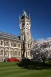 bloom;blooming;blooms;blossom;blossoming;blossoms;building;buildings;Clock-Tower;Clock-Towers;college;colleges;Dunedin;education;fresh;grow;growth;heritage;historic;historic-building;historic-buildings;historical;historical-building;historical-buildings;Historical-Registry-Building;history;N.Z.;New-Zealand;NZ;old;Otago;Otago-University;Registry-Building;renew;S.I.;season;seasonal;seasons;SI;South-Is.;South-Island;spring;springtime;tertiary-education;tradition;traditional;universities;University-of-Otago