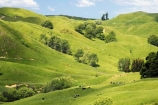 agricultural;agriculture;country;countryside;crop;crops;eastland;farm;farming;farmland;farms;field;fields;gisborne;horticulture;meadow;meadows;new-zealand;north-is.;north-island;paddock;paddocks;pasture;pastures;rural