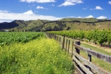 agricultural;agriculture;country;countryside;crop;crops;cultivation;eastland;farm;farming;farmland;farms;fence;fenceline;fences;field;fields;gisborne;grape;grapes;grapevine;horticulture;new-zealand;north-is.;north-island;row;rows;rural;tree;trees;vine;vines;vineyard;vineyards;vintage;wine;wineries;winery;wines