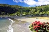 bay;bays;beach;beaches;coast;coastal;coastline;east-cape;east-coast;Eastland;flower;flowers;hicks-bay;Hicks-Bay;metrosideros-excelsa;new-zealand;north-is.;north-island;ocean;oceans;Onepoto-Bay;pohutukawa;pohutukawa-flower;pohutukawa-flowers;pohutukawa-tree;pohutukawa-trees;pohutukawas;sand;sandy;sea;shore;shoreline;surf;tree;trees;wave;waves