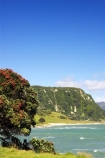 beach;beaches;coast;coastal;coastline;Eastland;flower;flowers;metrosideros-excelsa;new-zealand;north-is.;north-island;ocean;oceans;pohutakawa;pohutakawas;pohutukawa;pohutukawa-flower;pohutukawa-flowers;pohutukawa-tree;pohutukawa-trees;pohutukawas;sand;sandy;sea;shore;shoreline;surf;Te-Araroa;tree;trees;wave;waves