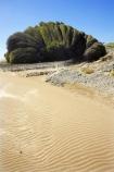 beach;beaches;coast;coastal;coastline;Eastland;new-zealand;north-is.;north-island;plant;ripple;ripples;sand;sandy;Te-Araroa;tree;trees;unusual;weather;wind;wind-blown;wind-sculpted;wind-shaped;wind_blown;windblown;windy