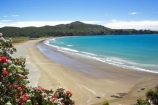 bay;bays;beach;beaches;coast;coastal;coastline;east-cape;east-coast;Eastland;flower;flowers;hicks-bay;Hicks-Bay;new-zealand;north-is.;north-island;ocean;oceans;Onepoto-Bay;pohutukawa;pohutukawa-flower;pohutukawa-flowers;pohutukawa-tree;pohutukawa-trees;pohutukawas;sand;sandy;sea;shore;shoreline;surf;tree;trees;wave;waves