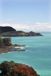coast;coastal;coastline;east-cape;east-coast;flower;flowers;metrosideros-excelsa;new-zealand;north-is.;north-island;ocean;oceans;plant;plants;pohutakawa;pohutakawas;pohutukawa;pohutukawa-flower;pohutukawa-flowers;pohutukawa-tree;pohutukawa-trees;pohutukawas;sea;shore;shoreline;surf;tree;trees;wave;waves;Whitianga-Bay