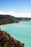 coast;coastal;coastline;east-cape;east-coast;Eastland;flower;flowers;metrosideros-excelsa;new-zealand;north-is.;north-island;ocean;oceans;plant;plants;pohutakawa;pohutakawas;pohutukawa;pohutukawa-flower;pohutukawa-flowers;pohutukawa-tree;pohutukawa-trees;pohutukawas;sea;shore;shoreline;surf;tree;trees;wave;waves;Whituare-Bay