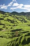 agricultural;agriculture;country;countryside;Eastland;farm;farming;farmland;farms;field;fields;meadow;meadows;N.I.;N.Z.;New-Zealand;NI;North-Is;North-Is.;North-Island;NZ;Otoko-Track;Otoko-Walkway;paddock;paddocks;pasture;pastures;rural;season;seasonal;seasons;spring;springtime;Te-Karaka;Waihuka-River;Waihuka-River-Valley