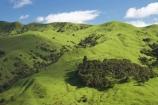 agricultural;agriculture;country;countryside;Eastland;farm;farming;farmland;farms;field;fields;meadow;meadows;N.I.;N.Z.;New-Zealand;NI;North-Is;North-Is.;North-Island;NZ;Otoko-Track;Otoko-Walkway;paddock;paddocks;pasture;pastures;rural;season;seasonal;seasons;spring;springtime;Te-Karaka;Waihuka-River-Valley